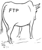 http://www.hostedftp.com/static/cow.png